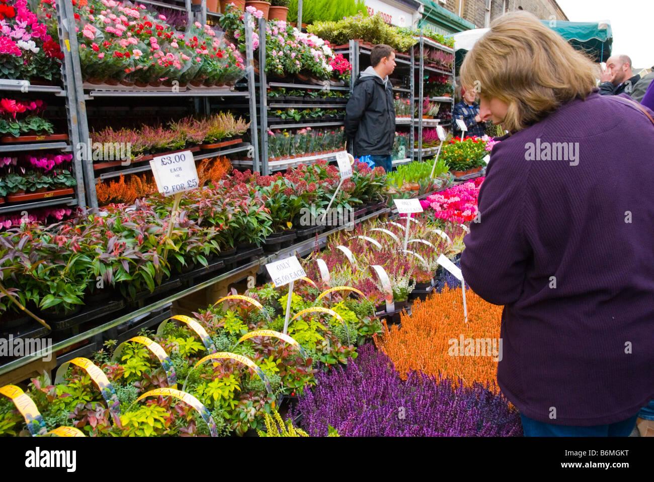 Columbia Road Flower Market au cours de la journée du marché du dimanche dans l'Est de Londres Angleterre Photo Stock