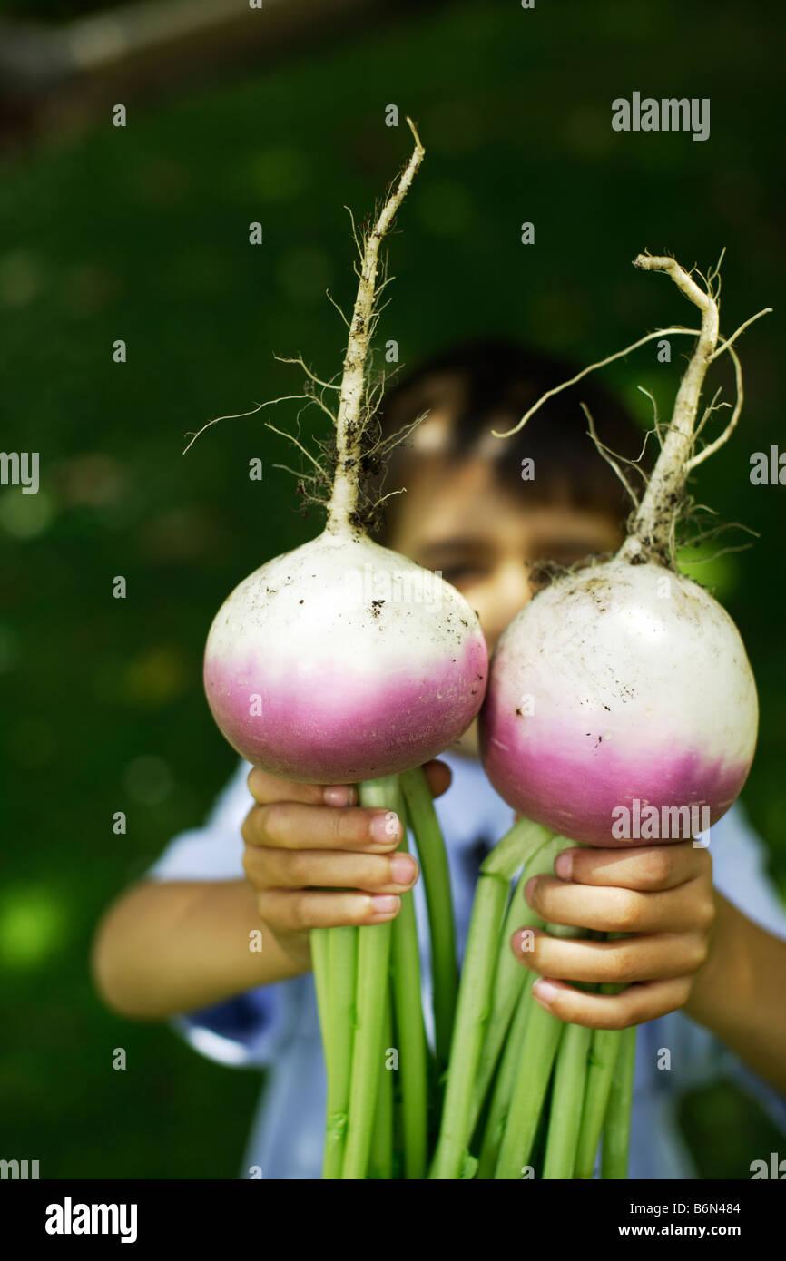Six ans détient deux navets cultivés bio Banque D'Images