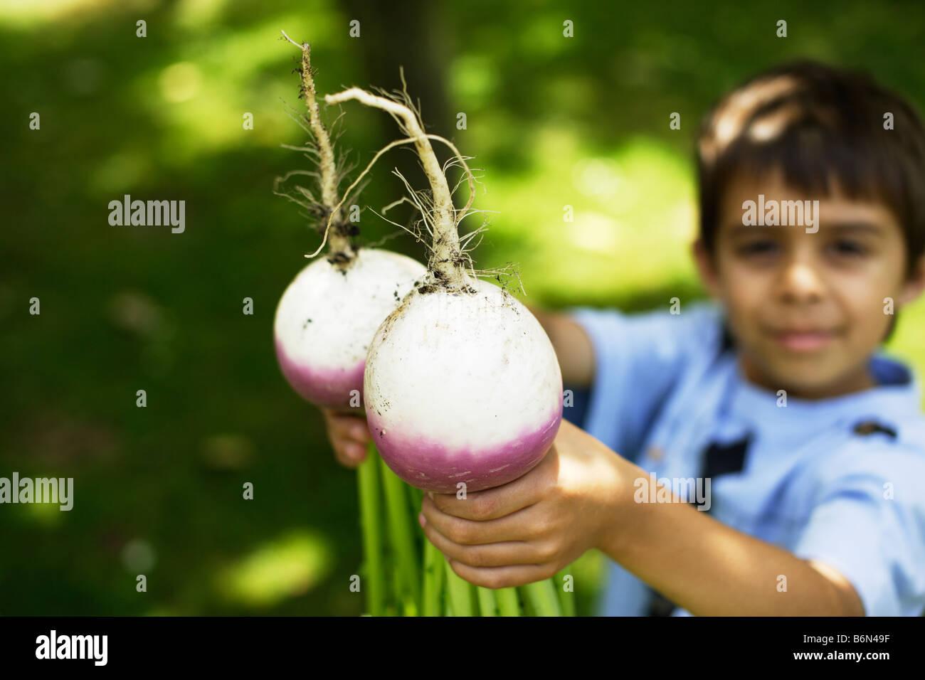 Six ans détient deux navets cultivés bio Photo Stock
