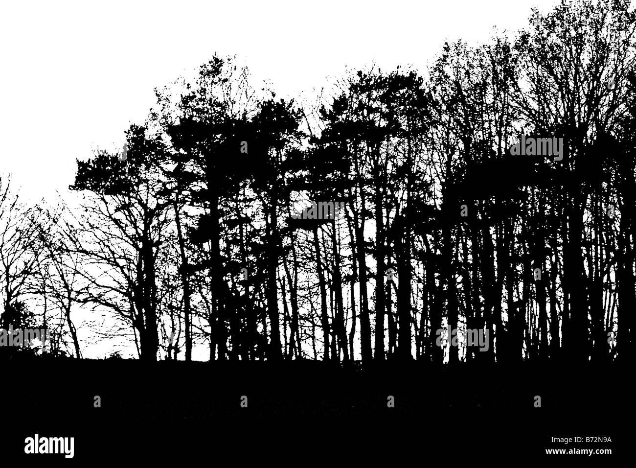 Unset derrière des arbres monochrome abstrait Banque D'Images
