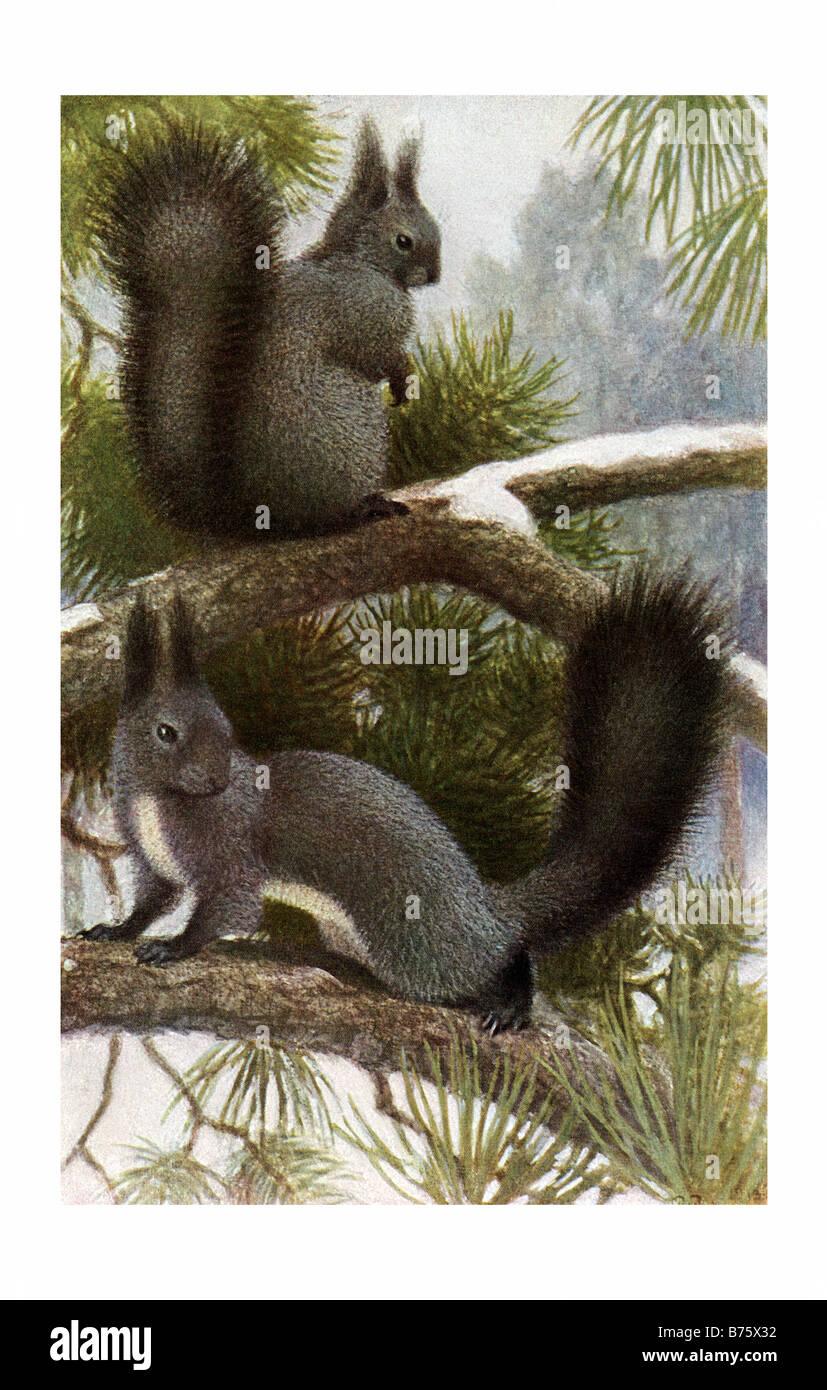 Illustration D Un écureuil Roux En Vêtements D Hiver Banque