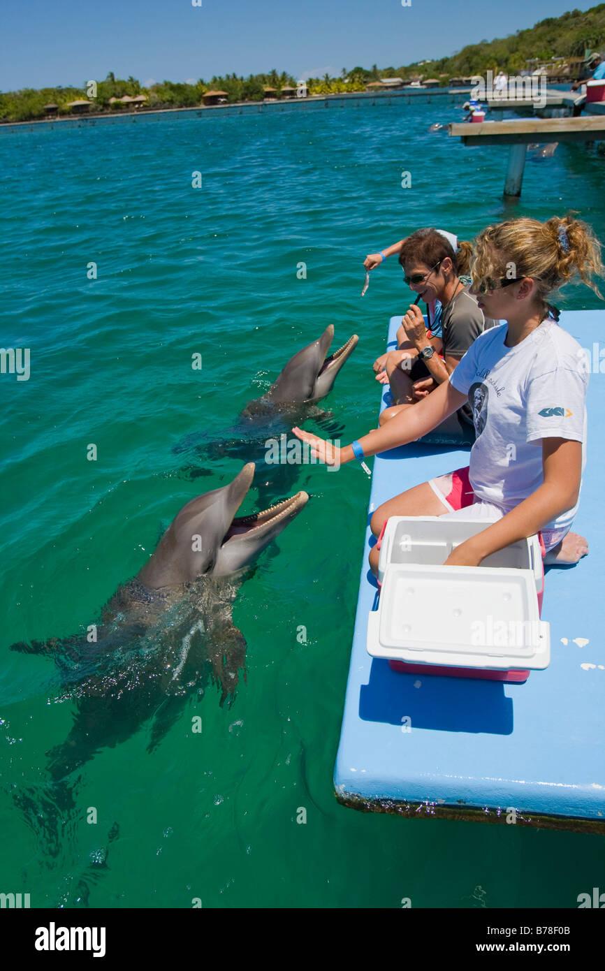 L'école des enfants qui reçoivent un cours de biologie d'un entraîneur de dauphin, Anthony's Photo Stock