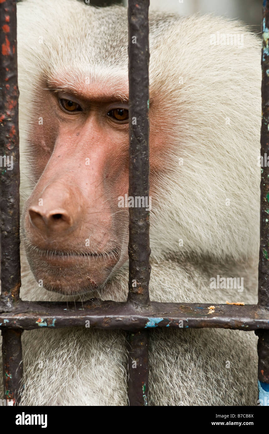 Cruauté envers les animaux Banque D'Images