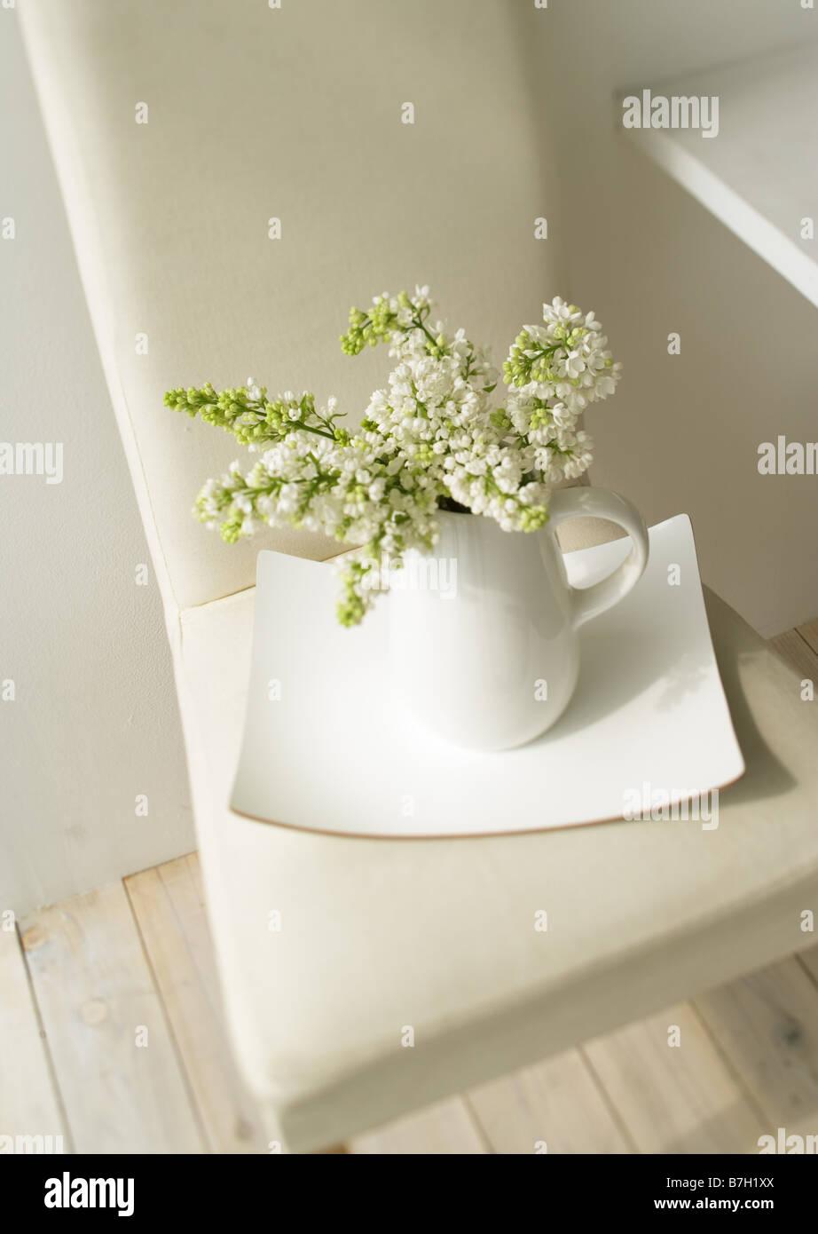 Le lilas blanc en Chine pot Photo Stock