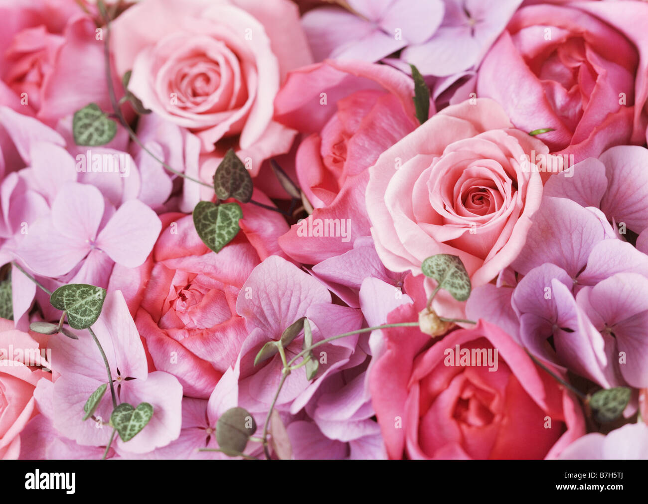 Rose et de l'hortensia Banque D'Images
