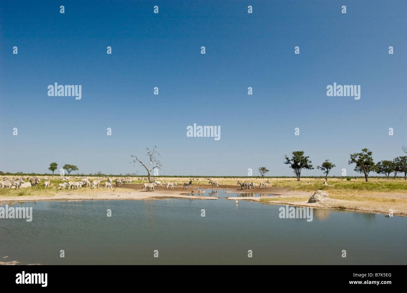 Savuti Marsh avec zèbres Photo Stock