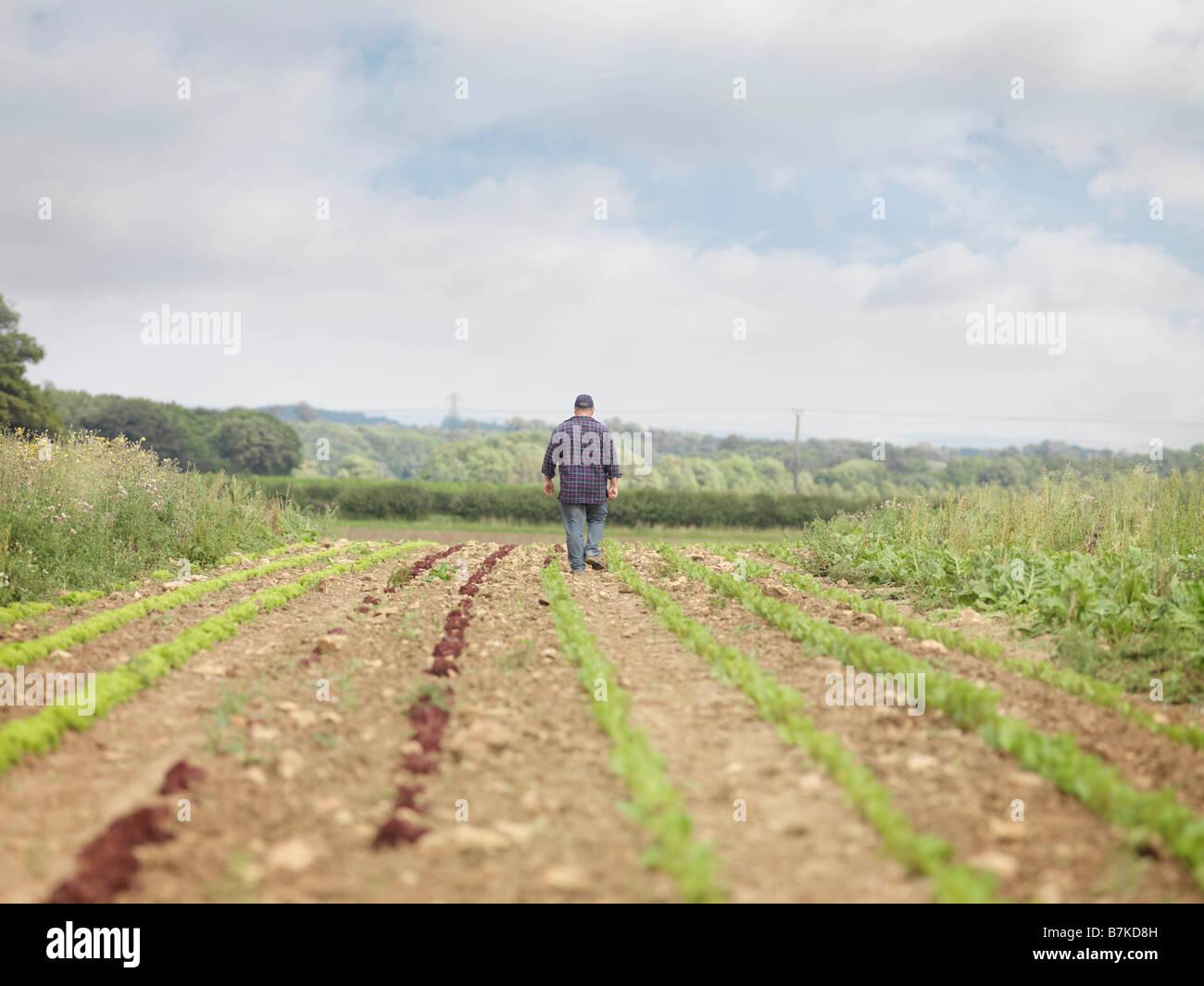 Farmer Walking in crop Field Vue arrière Photo Stock