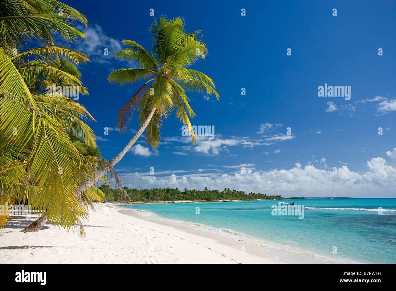 Plage sur l'île de Saona NATIONAL Parque del Este RÉPUBLIQUE DOMINICAINE CARAÏBES Photo Stock