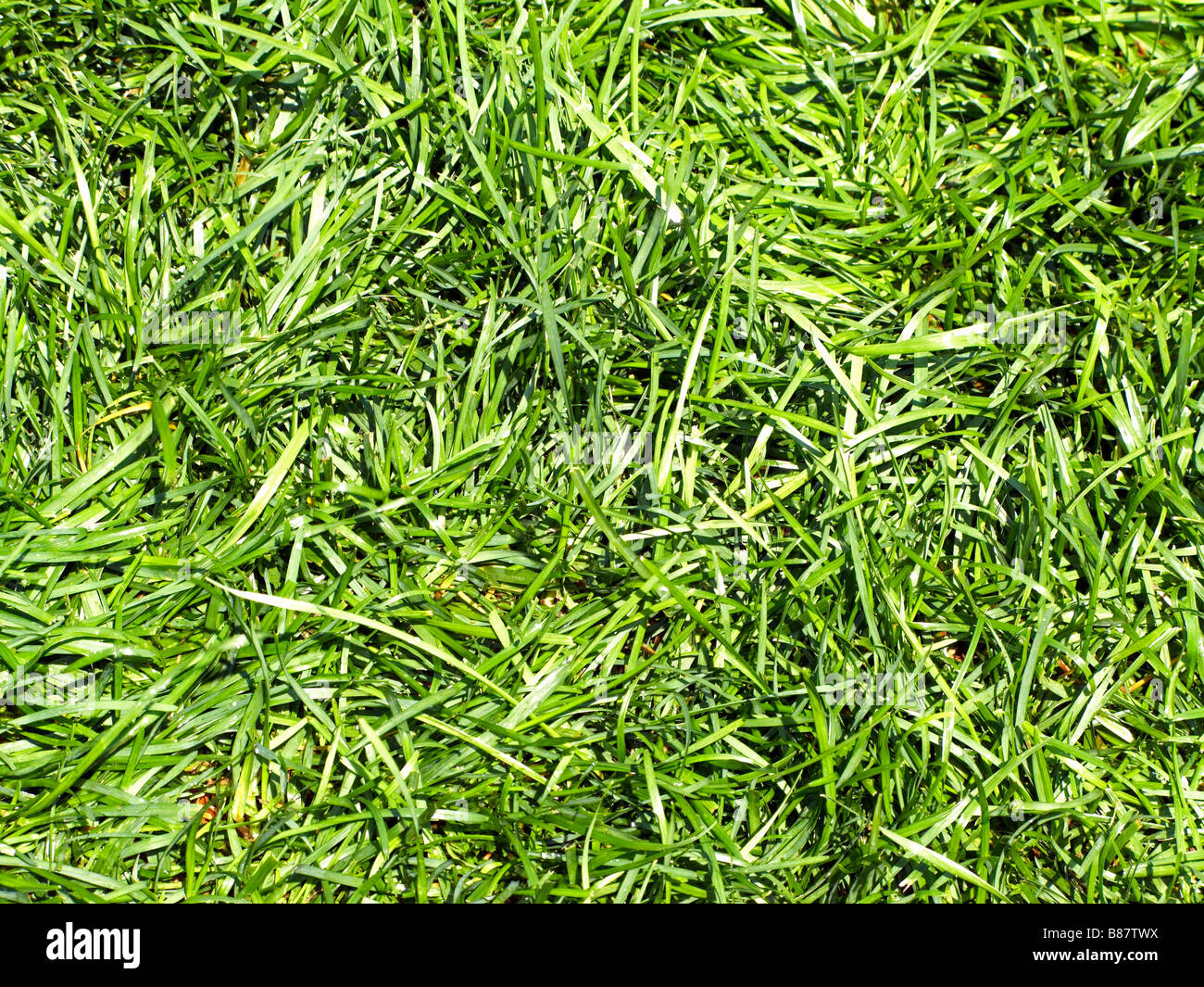 Grass Photo Stock