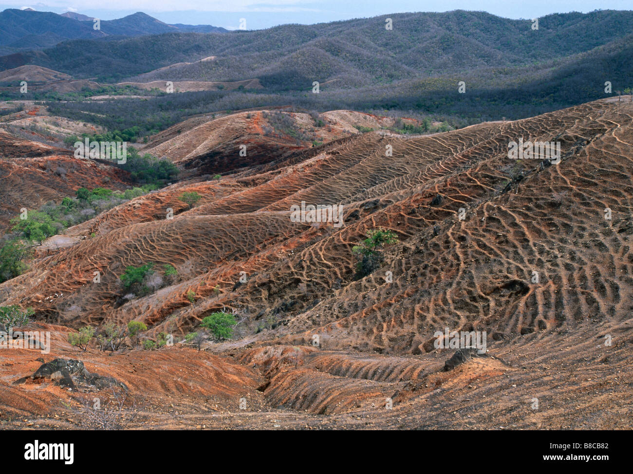 DÉFORESTATION Photo Stock