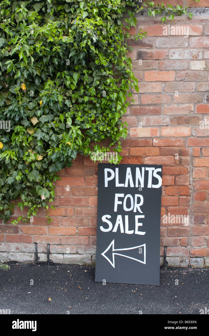 Panneau disant plantes pour vente appuyé contre un mur de lierre poussant sur elle Photo Stock