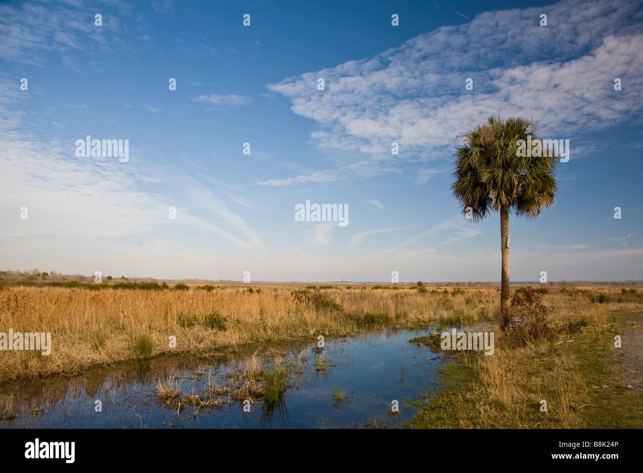 Paynes Prairie Preserve State Park à Micanopy Gainesville près de Florida Photo Stock