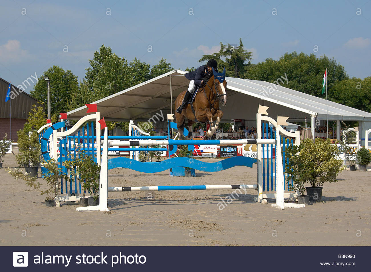 Show Jumping Photo Stock