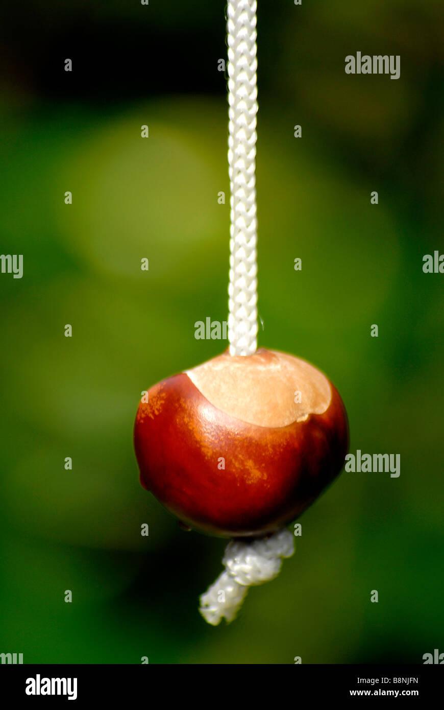 Une chaîne sur un conker Photo Stock