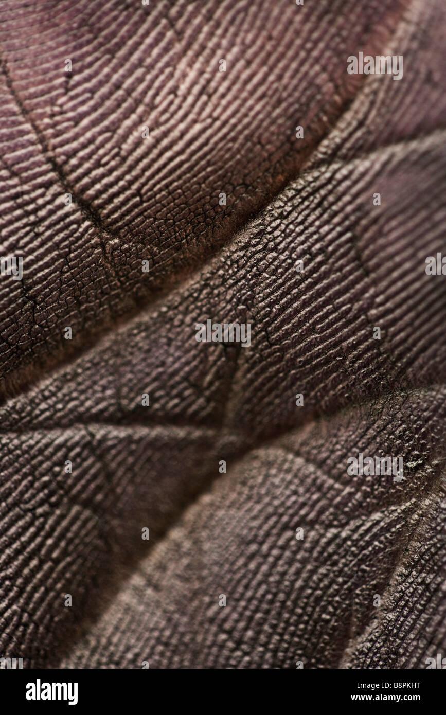 La paume de la main noircie, extreme close-up Photo Stock