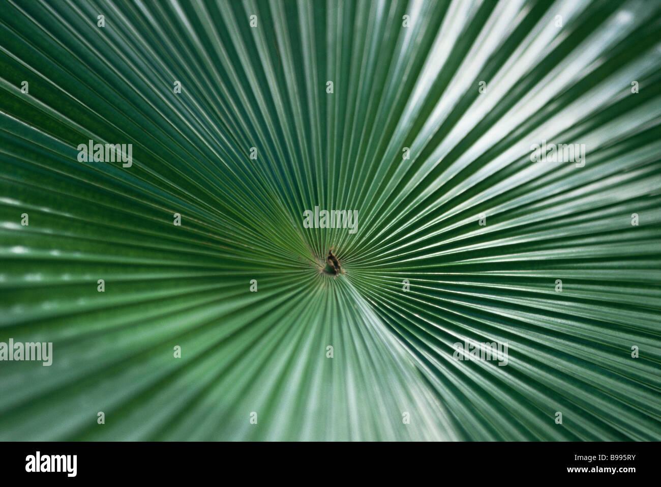 Feuille de palmier Photo Stock