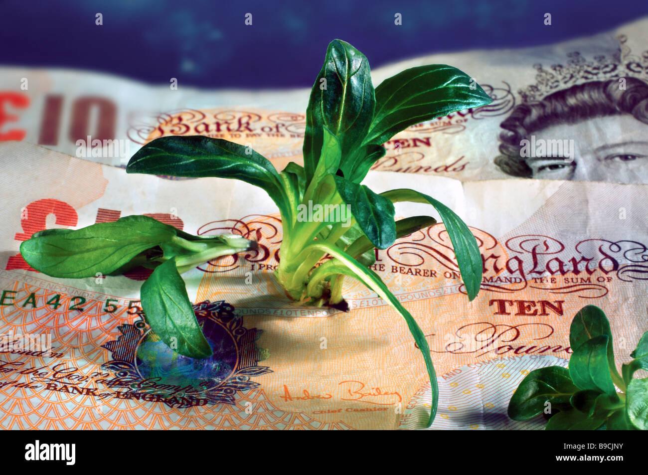 Les pousses vertes de la croissance économique de l'économie britannique de récupération Photo Stock
