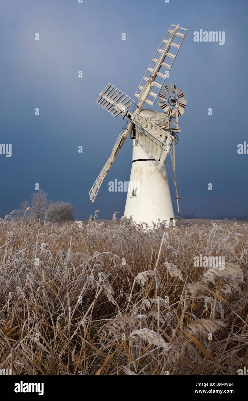Thurne Moulin éclairé par un patch de soleil avec frost roseaux enduits dans le premier plan Photo Stock