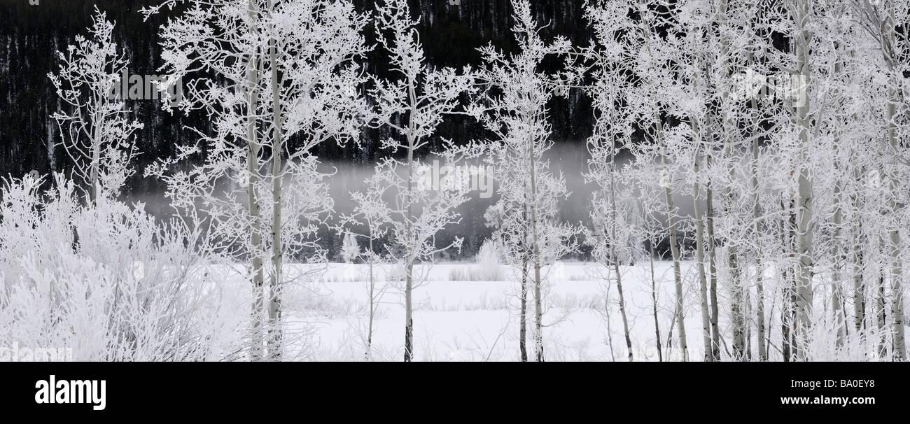 Panorama d'arbres et arbustes couverts de givre sur un matin froid d'Oxbow Bend Rivière Snake contre Signal Mountain, au Wyoming, USA Banque D'Images