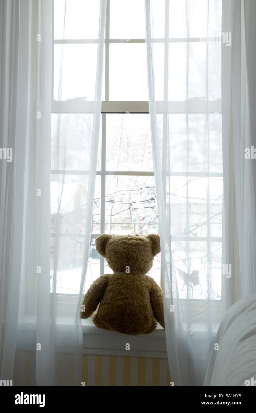 Ours assis dans la fenêtre Photo Stock
