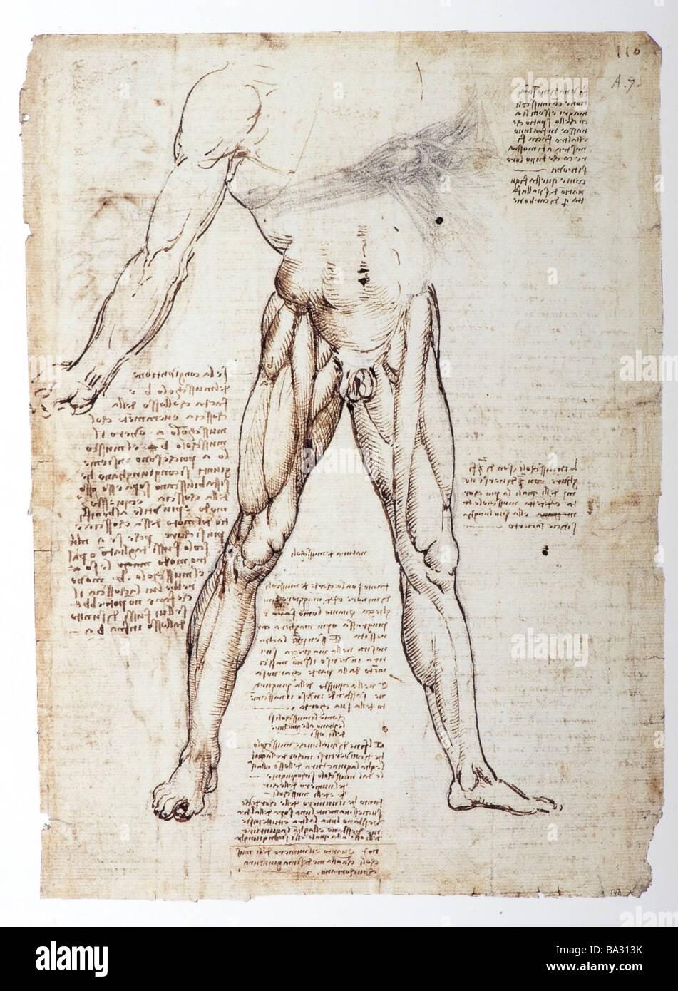 L'étude anatomique des muscles des jambes par Leonardo da Vinci 1509 Plume, encre brune Photo Stock