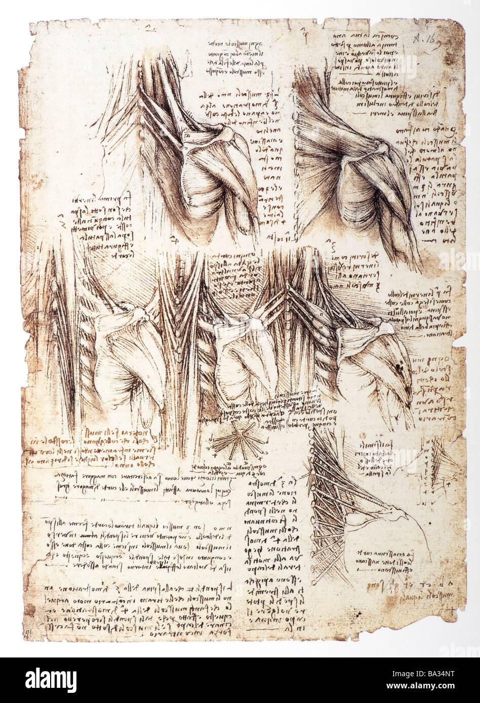L'étude anatomique des muscles de l'arrière par Leonardo da Vinci 1509 stylo encre marron Photo Stock