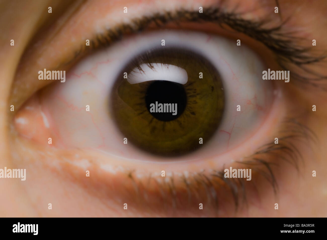 yeux bruns Photo Stock