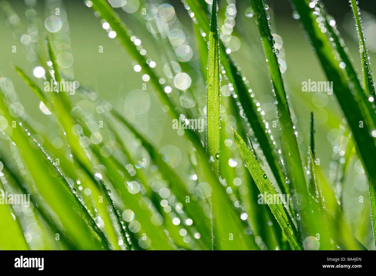 L'herbe et les gouttelettes Photo Stock