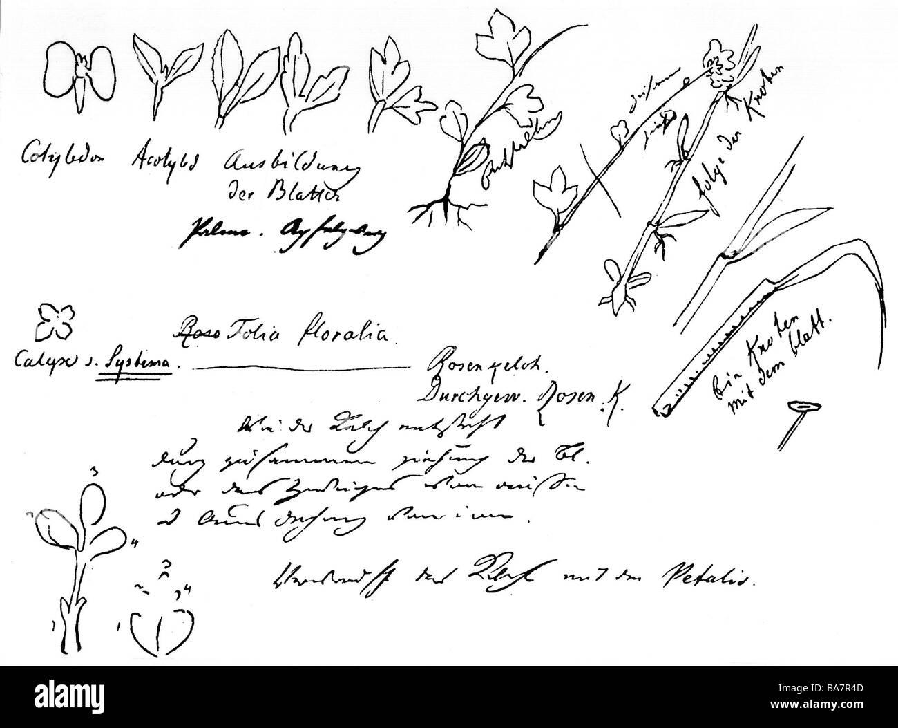 Goethe Johann Wolfgang 28 8 1749 22 3 1832 L Auteur