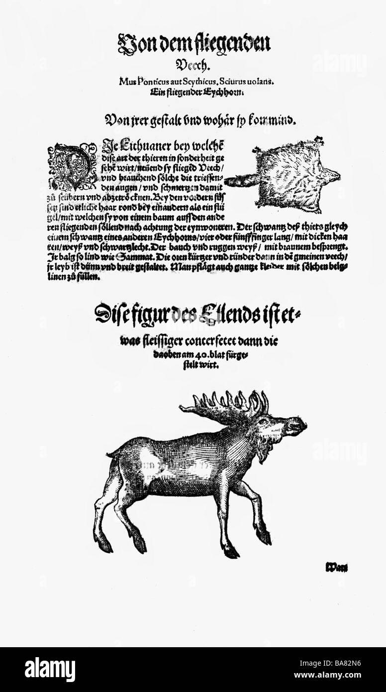 """Zoologie / animaux, manuels scolaires, 'Historia animalium"""", par Conrad Gessner, Zurich, Suisse, 1551  Photo Stock"""