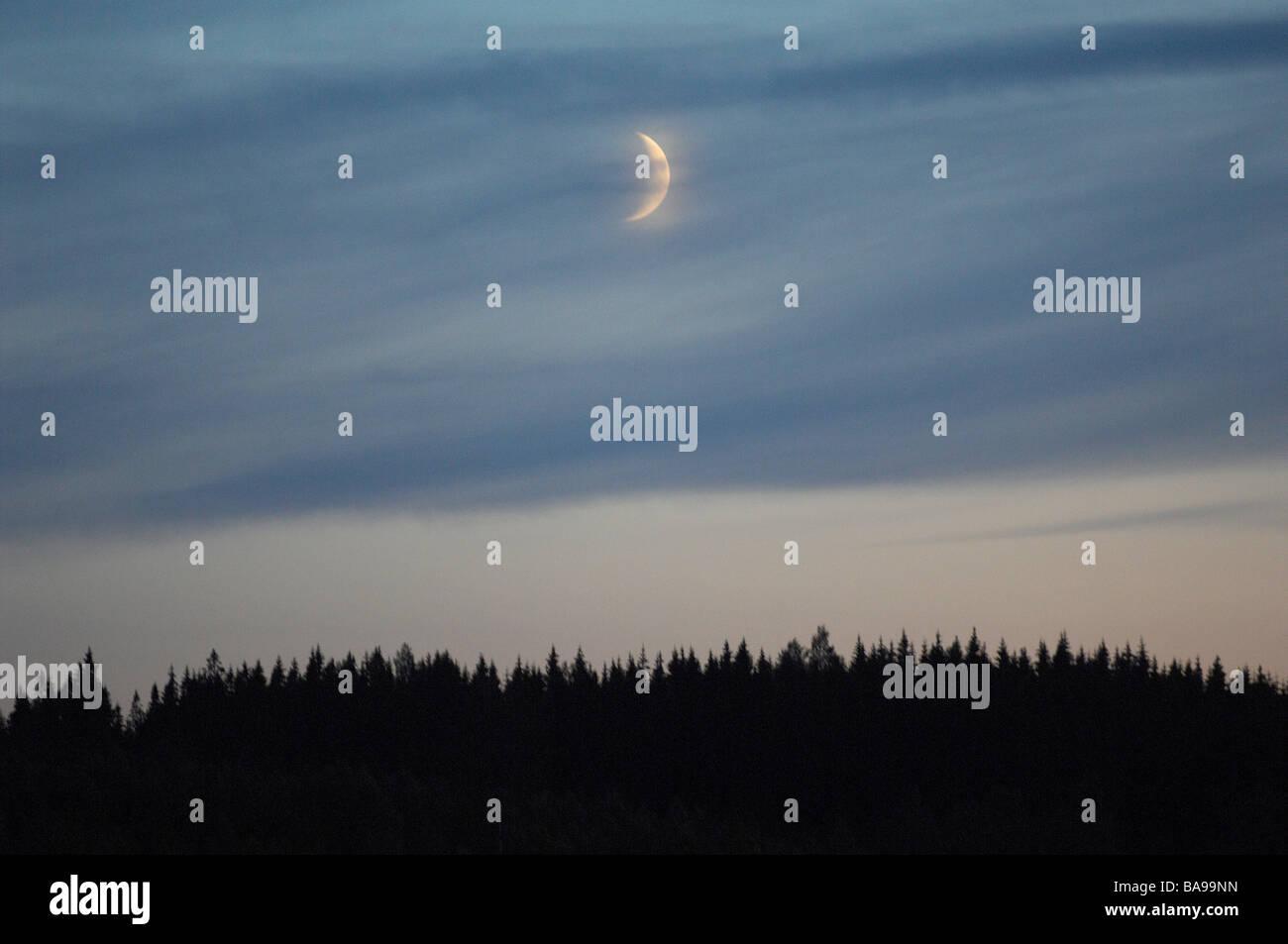 Une lune au-dessus d'une forêt, la Suède. Photo Stock