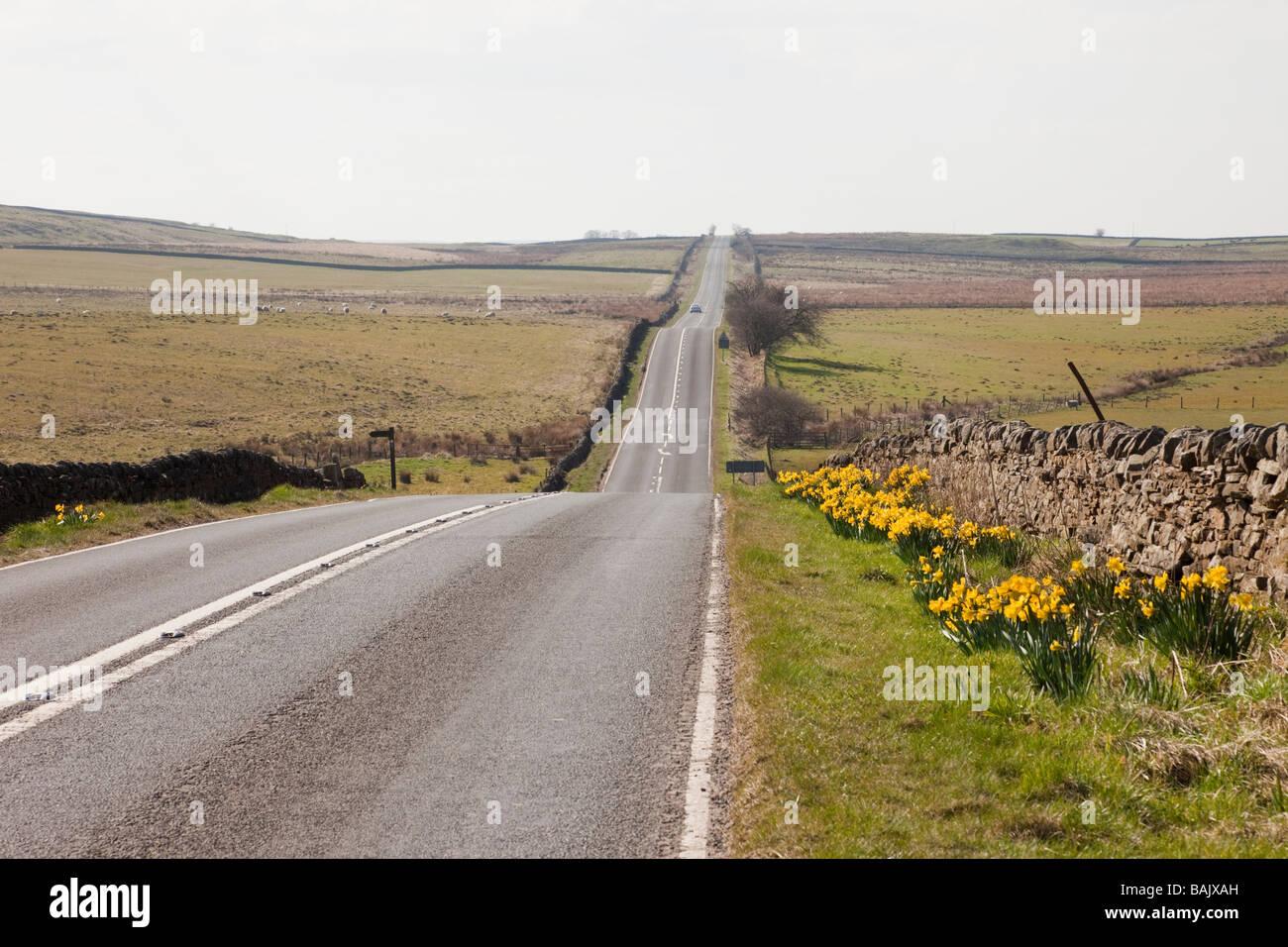 Longue ligne droite de la route de campagne tranquille avec des jonquilles en bordure de Parc National de Northumberland. Photo Stock