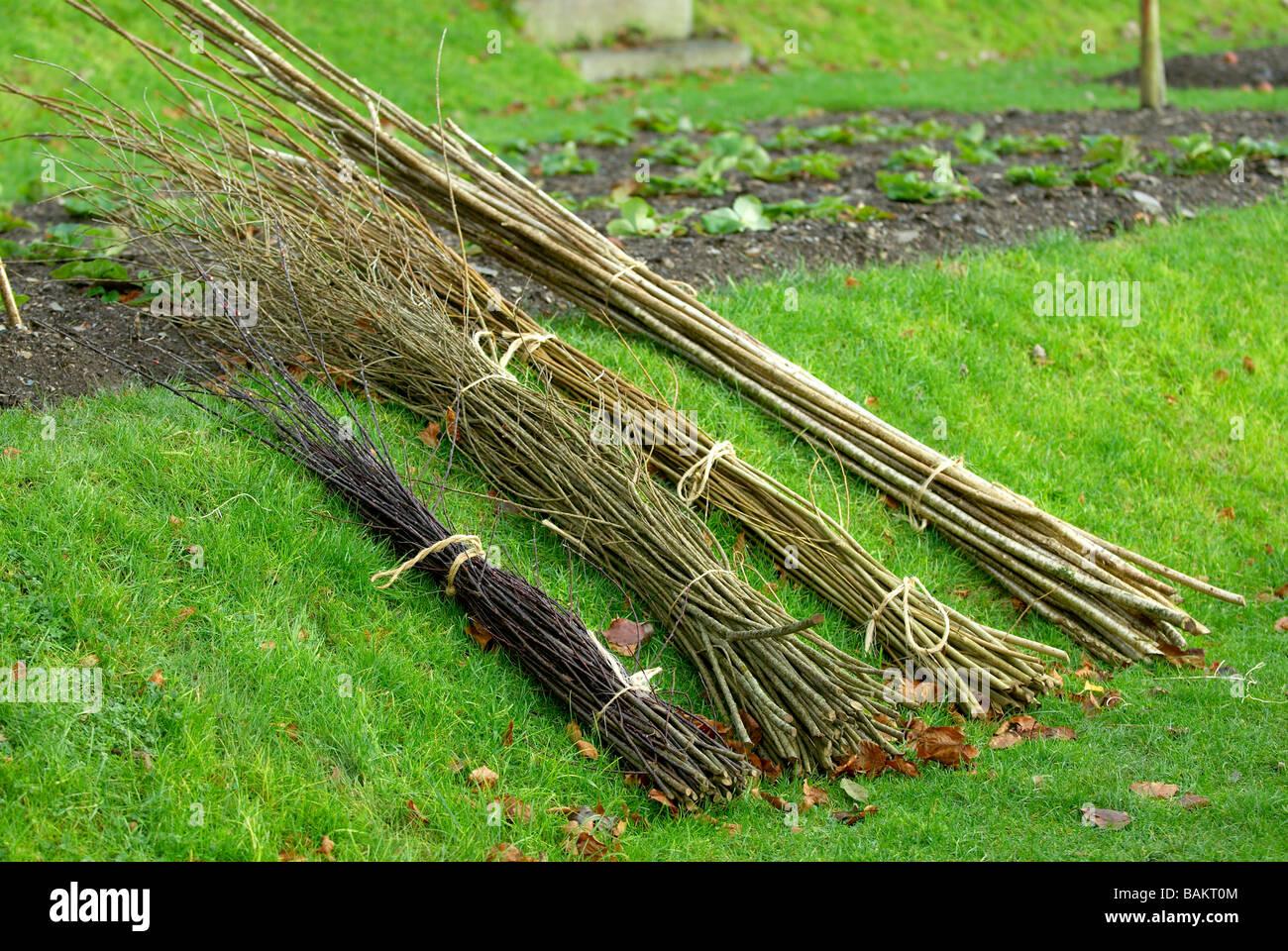 Sélection des tiges de noisetier et de saule Photo Stock