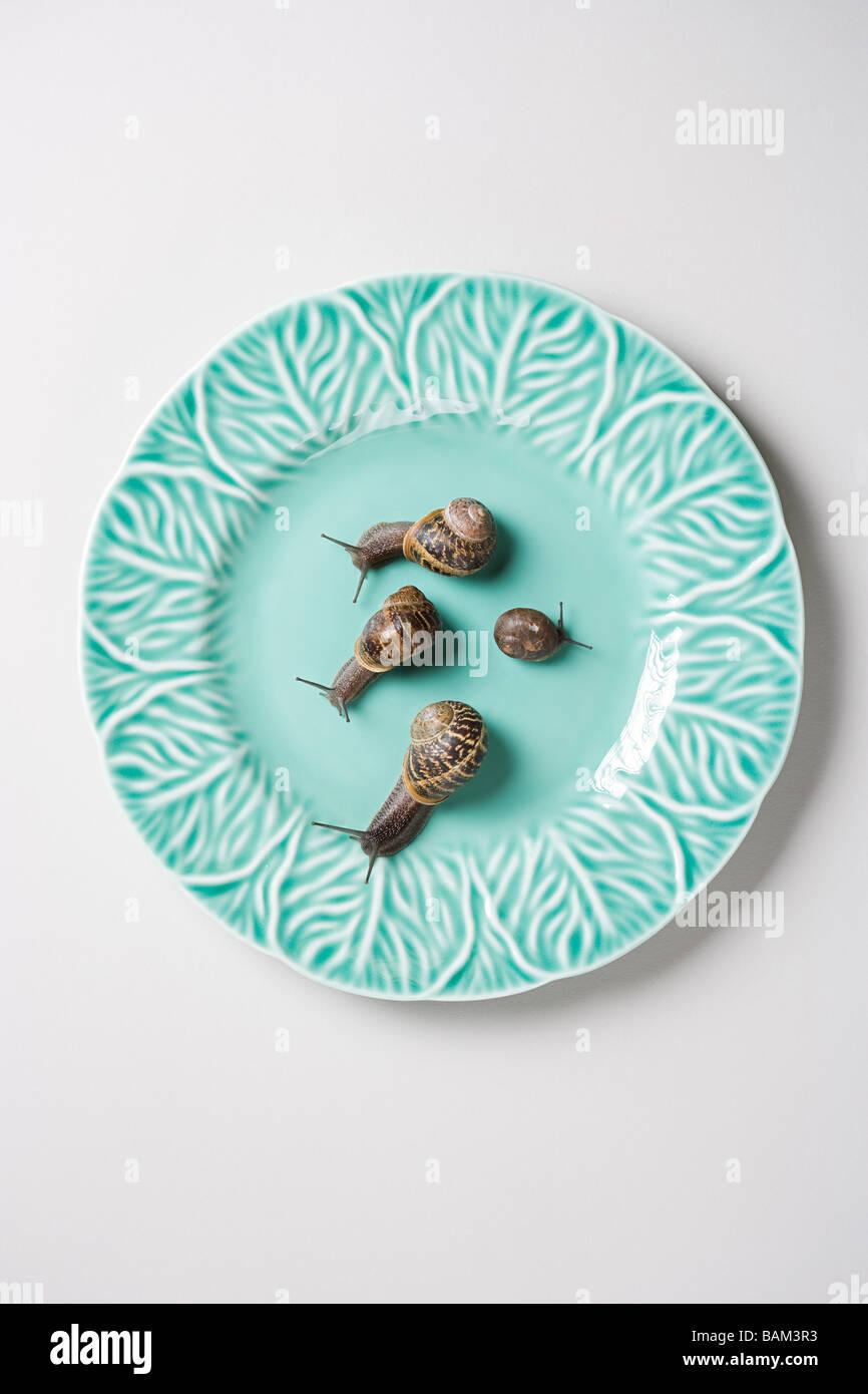 Quatre escargots sur une plaque Photo Stock