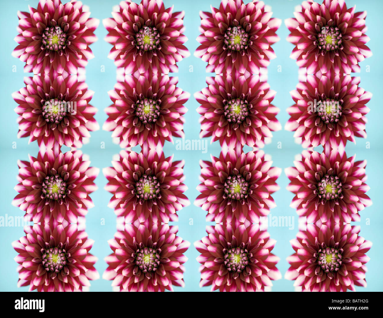 Dahlia fleurs, image abstraite. Photo Stock