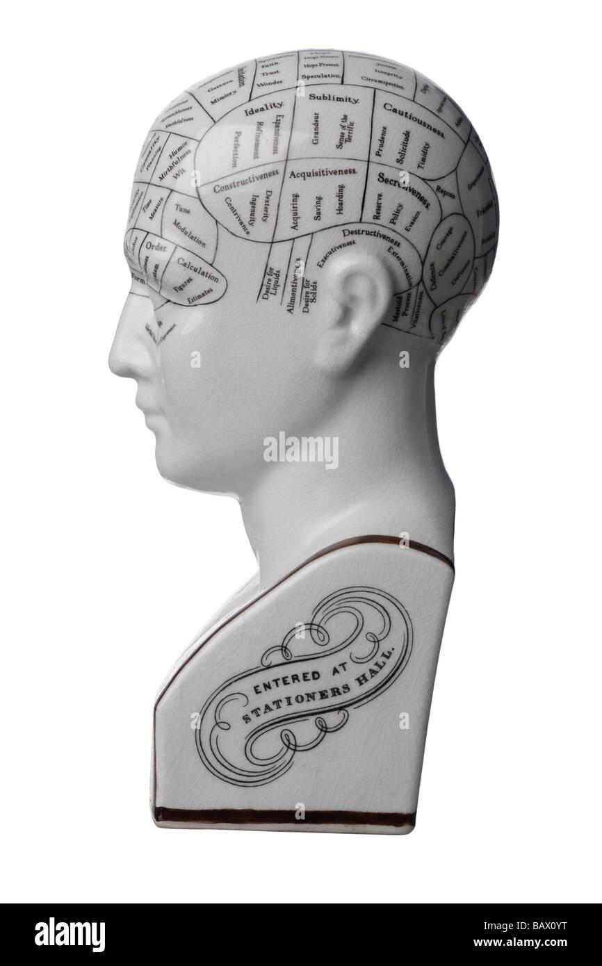 La phrénologie tête buste en céramique Photo Stock