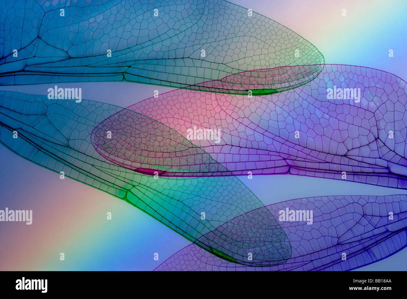 Résumé des ailes de libellule et arc-en-ciel. Photo Stock