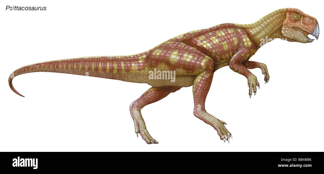 Psittacosaurus, 'lézard perroquet,' au Crétacé inférieur, Petit dinosaure herbivore Photo Stock