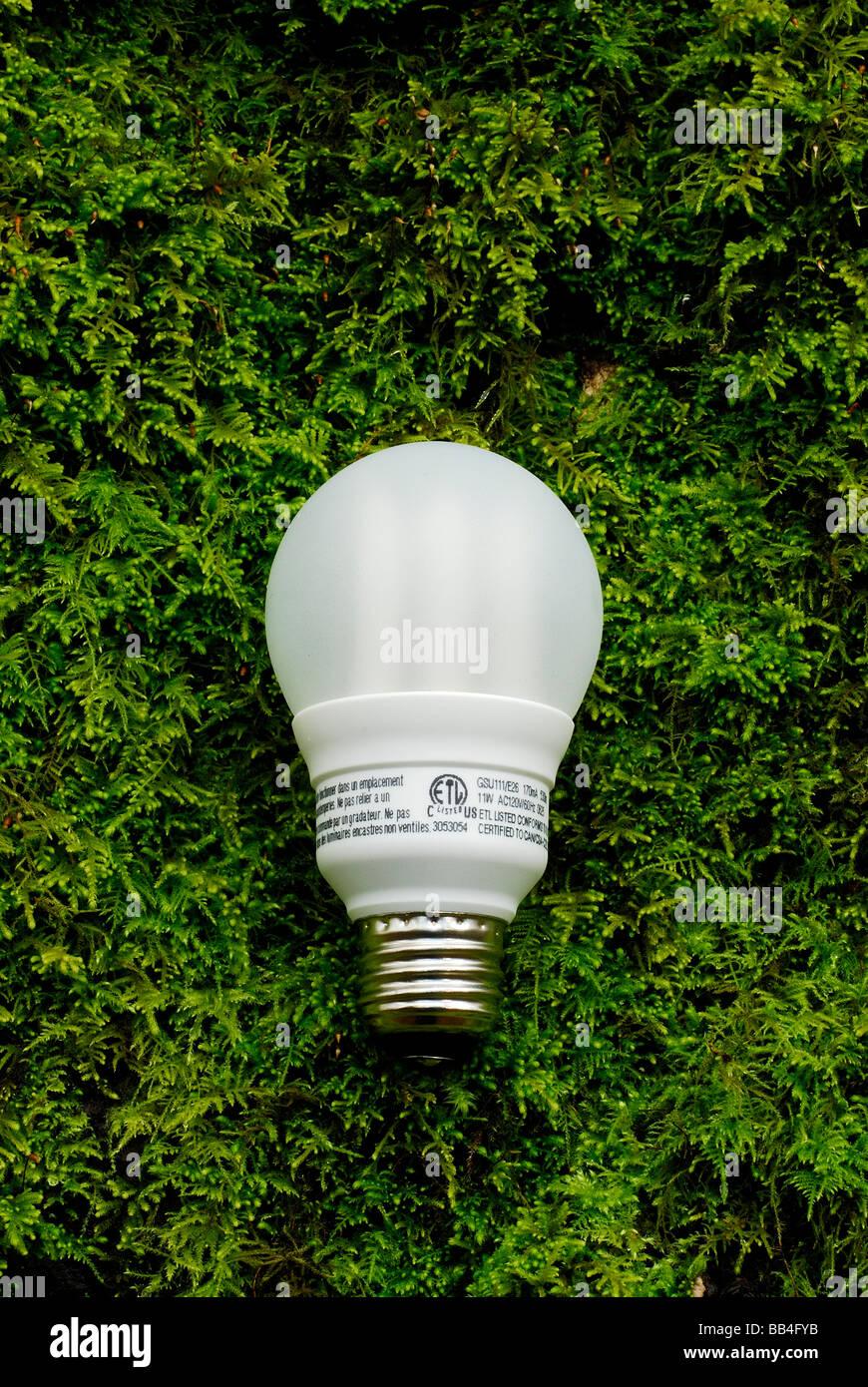 Ampoule à économie d'énergie. Photo Stock