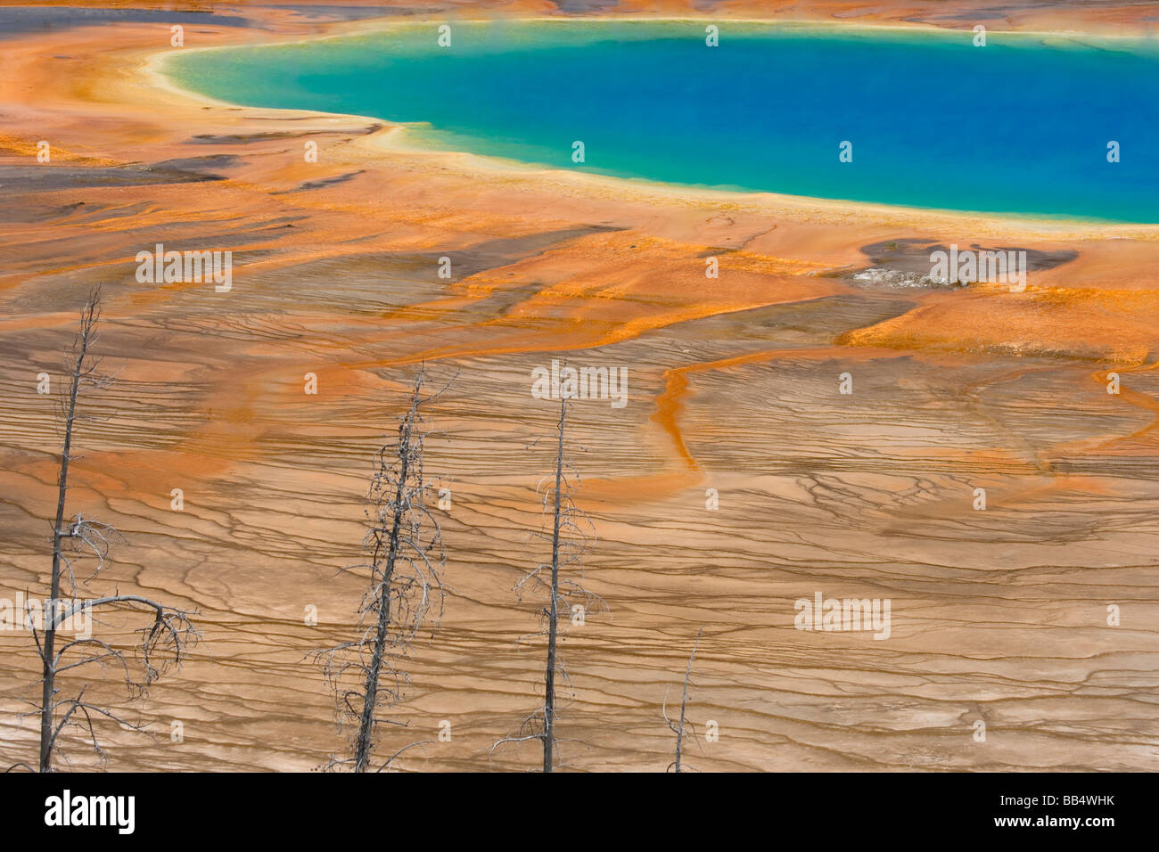 USA, Wyoming, Yellowstone National Park. Les couleurs et motifs du Grand Prismatic Spring avec arbres morts en premier Photo Stock