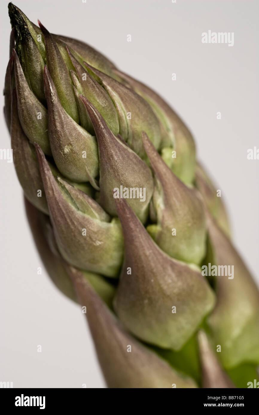 Pointe de la grande asperge. L'asperge est riche en acide folique, de potassium et de la rutine. Photo Stock
