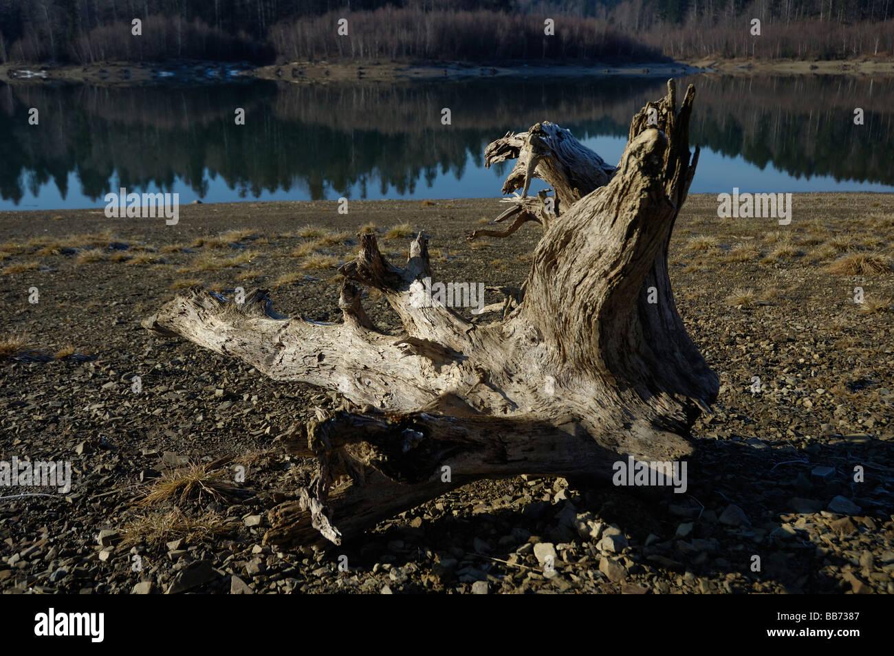 Arbre mort près du lac Photo Stock