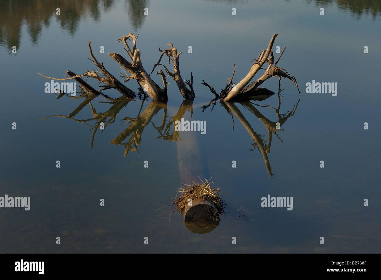 Arbre mort flottant dans un lac Photo Stock
