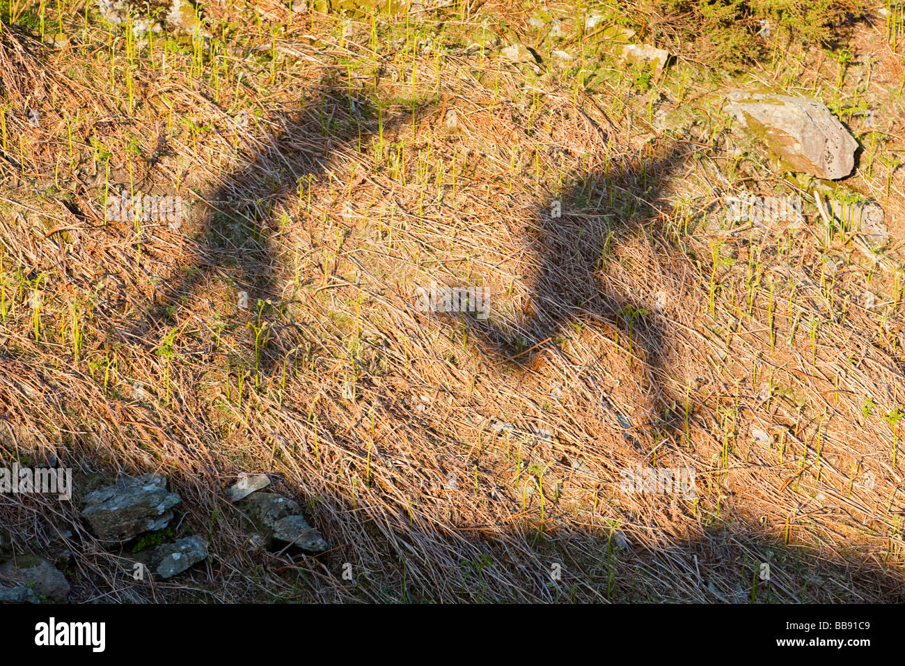 L'ombre 2 hommes sautant dans le Lake District UK Photo Stock