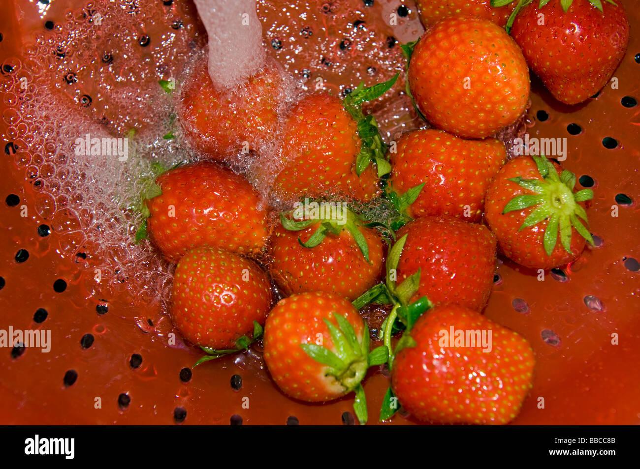 Fraise fraises laver écran riddle tamis tamis nettoyer nettoyage jet d'arrosage de l'eau de cuisson cook cuisine rouge préparer Banque D'Images