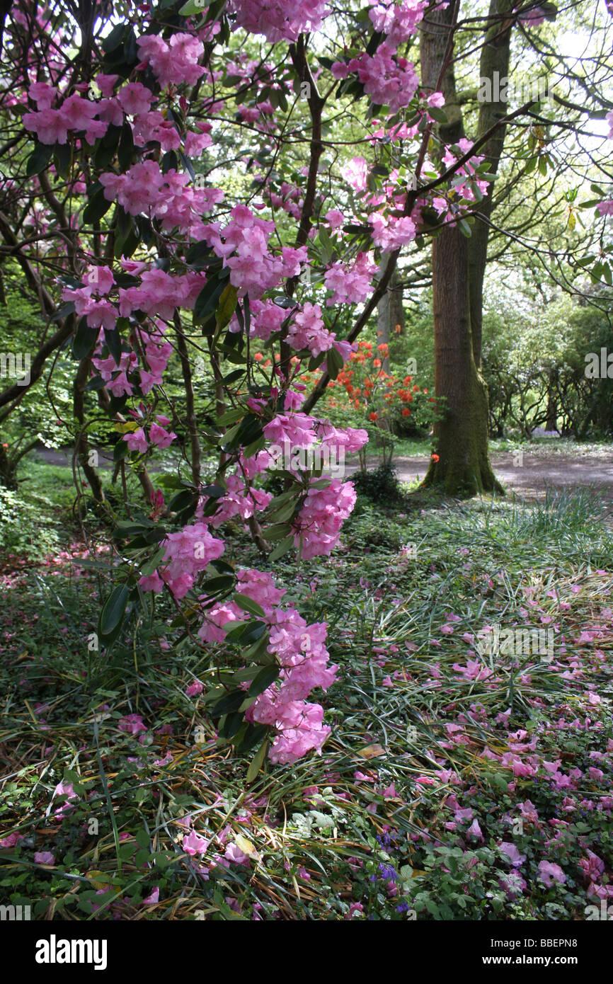 Fleurs dans un parc de Cardiff. Photo Stock