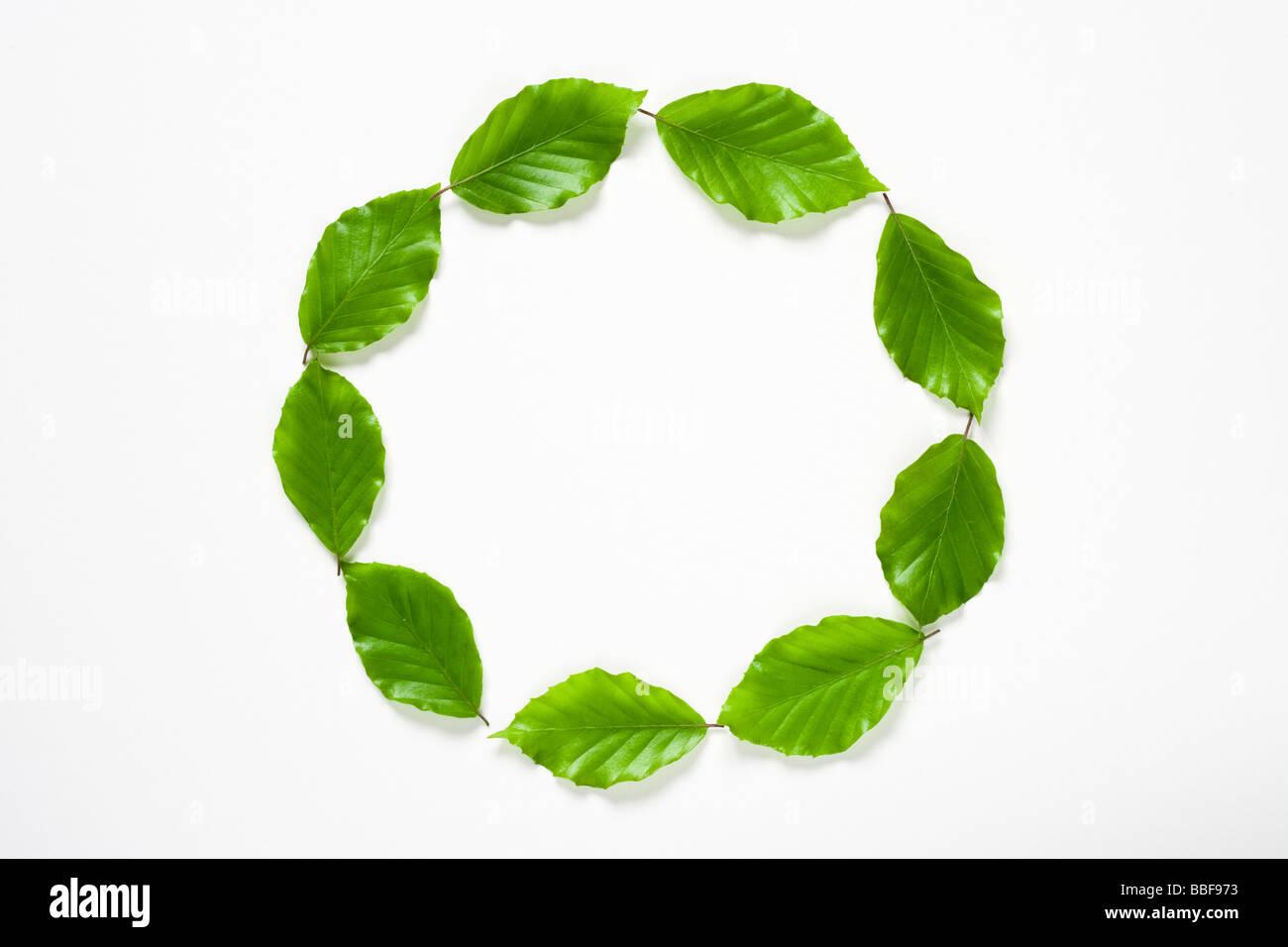 Cercle de feuilles. Feuilles de hêtre. Photo Stock