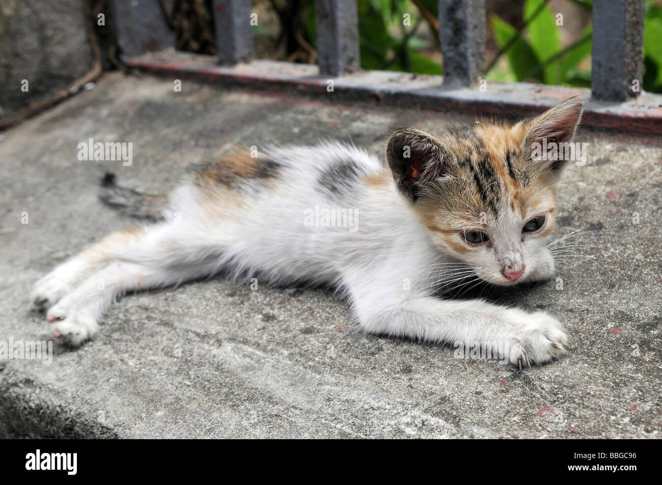 Maigre jeune chat Photo Stock