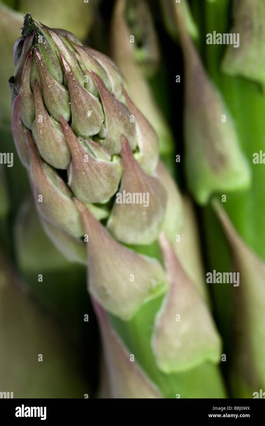 Près d'une grande asperge britannique. L'asperge est riche en acide folique, de potassium et de la Photo Stock