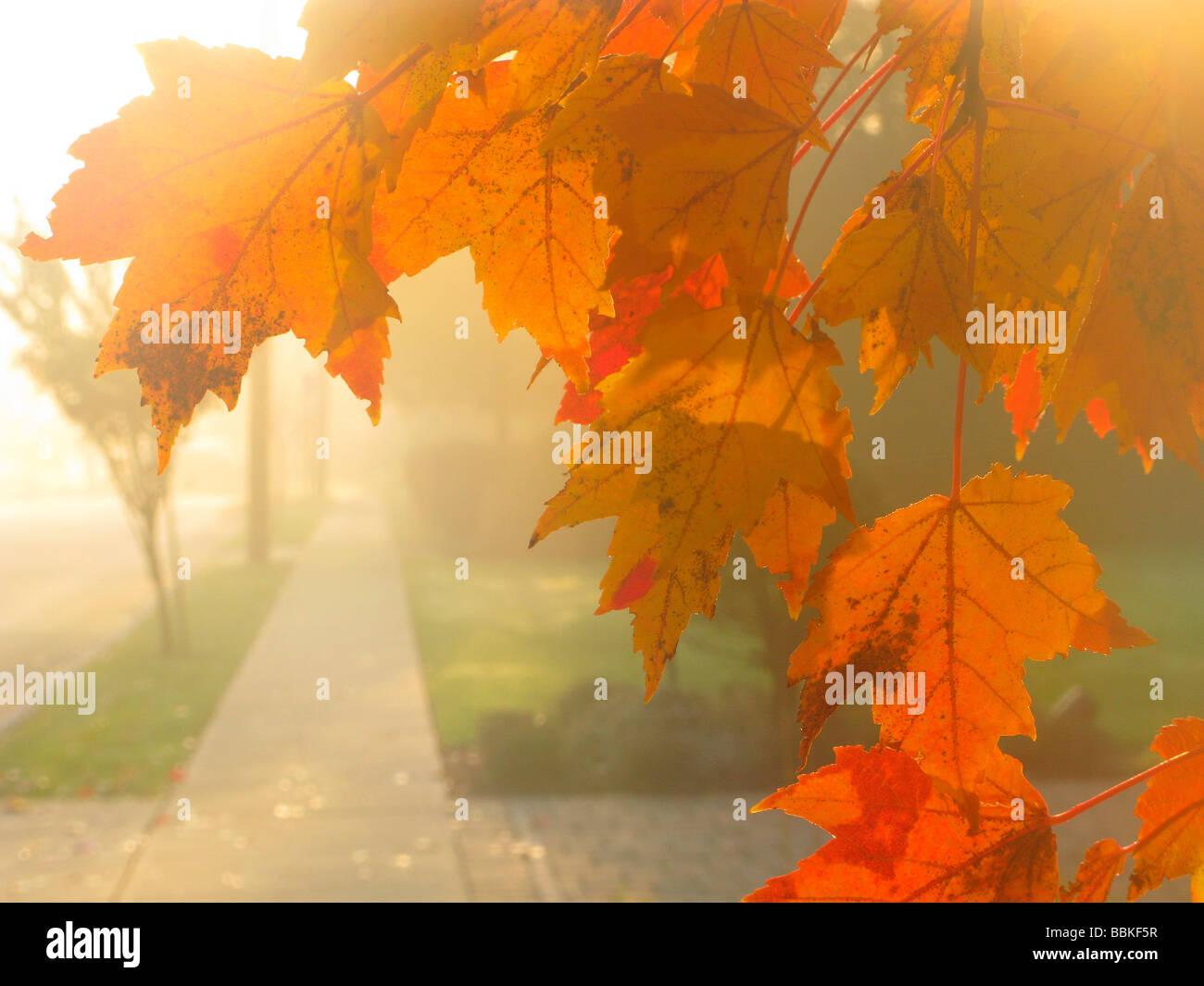 Jaune feuilles d'automne Photo Stock